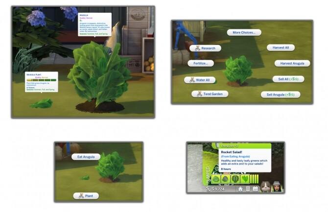 HARVESTABLE ARUGULA at Icemunmun image 3901 670x433 Sims 4 Updates