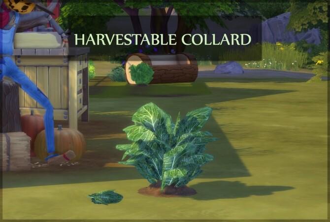 HARVESTABLE COLLARD GREENS at Icemunmun image 3914 670x450 Sims 4 Updates