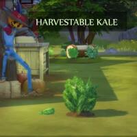 HARVESTABLE-KALE-by-ICEMUNMUN