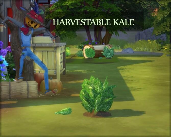 HARVESTABLE KALE at Icemunmun image HARVESTABLE KALE by ICEMUNMUN 670x535 Sims 4 Updates