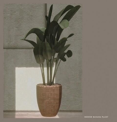 DECOR MODERN PLANT