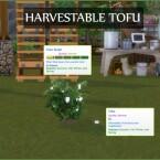 HARVESTABLE TOFU