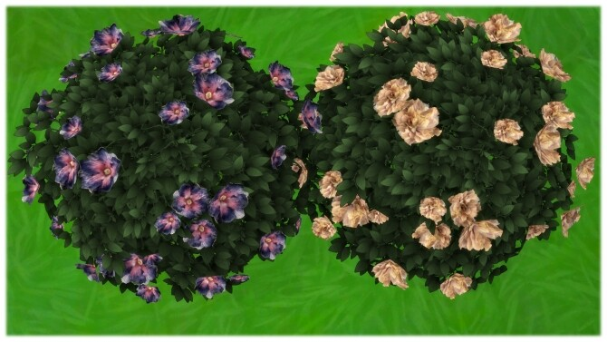 Yummy Dinner Plate Hibiscus Bush by Wykkyd at Mod The Sims image 937 670x377 Sims 4 Updates