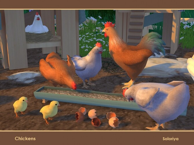 Chickens by soloriya at TSR image 114 670x503 Sims 4 Updates