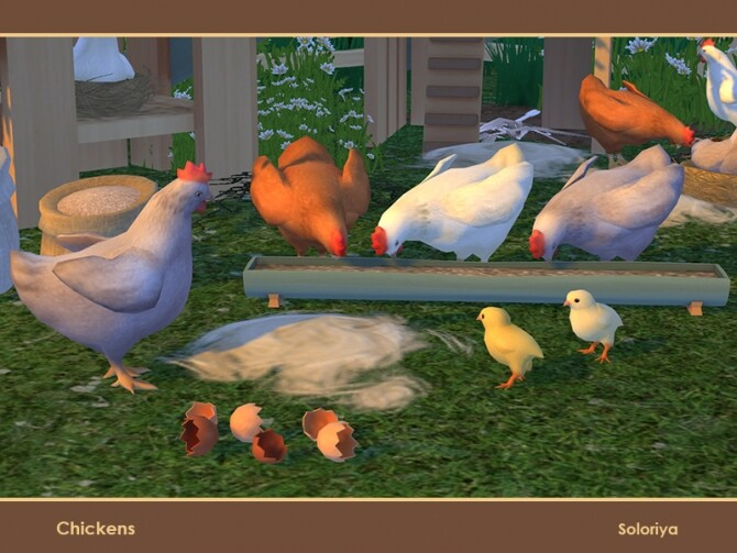 Chickens by soloriya at TSR image 117 670x503 Sims 4 Updates