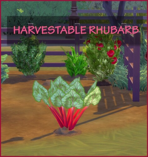 HARVESTABLE RHUBARB