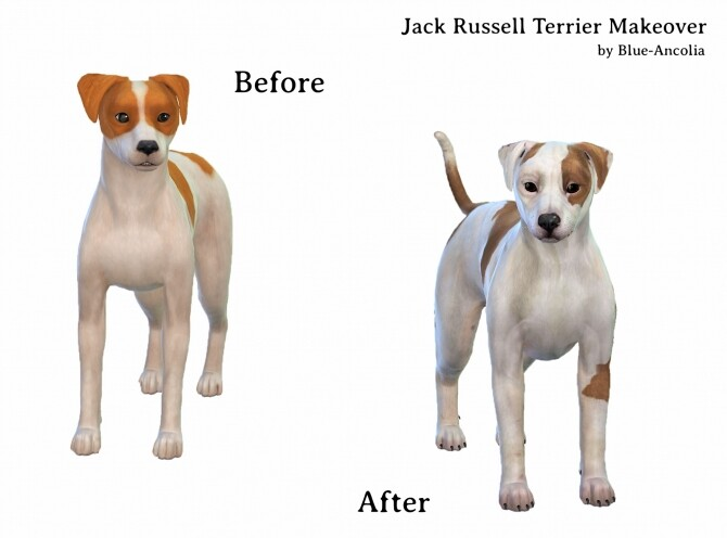 Sims 4 Jack Russell Terrier Makeover at Blue Ancolia