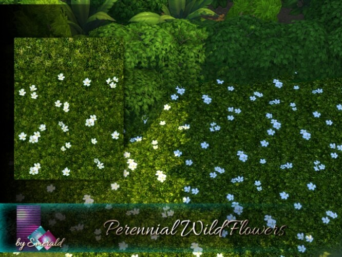 Perennial Wild Flowers by emerald
