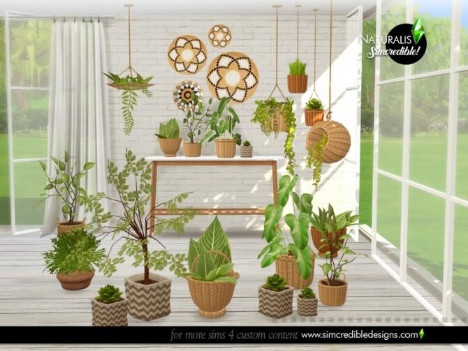 Naturalis Plants by SIMcredible at TSR image 6915 670x503 Sims 4 Updates