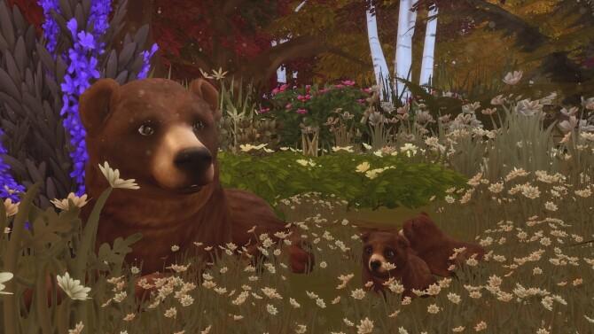 Sims 4 Grizzly Bear at Kalino