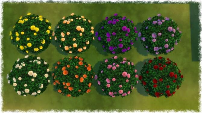 Mumumental Fall Mums Shrub 2020 by Wykkyd at Mod The Sims image 1521 670x377 Sims 4 Updates