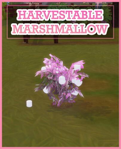 HARVESTABLE MARSHMALLOW