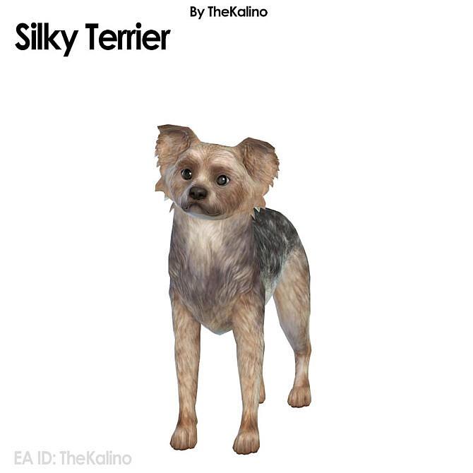 Sims 4 Silky Terrier at Kalino
