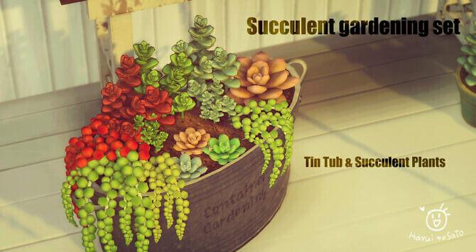 Succulent Gardening Set