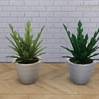 Contemporary Sims 4 Radishly Plant