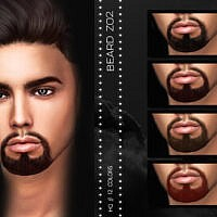Beard Z02 By Zenx