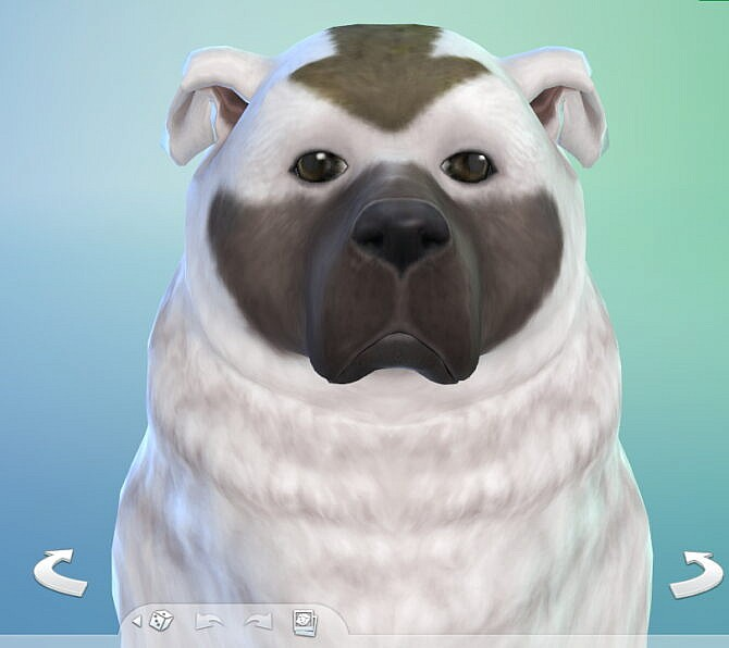 Sims 4 Appa from Avatar as dog by katie eevee at Mod The Sims 4