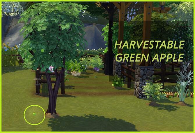 Harvestable Green Apple