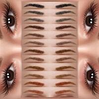 Eyebrow Z05 By Zenx