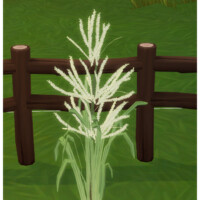 Sticky Rice – Glutinous Rice
