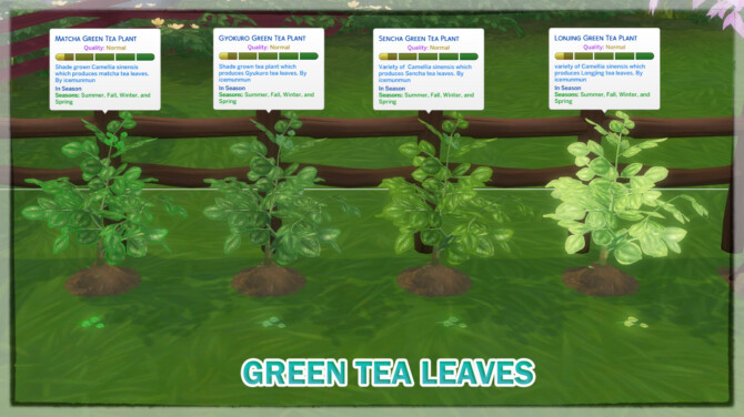 Harvestable Green Tea Leaves