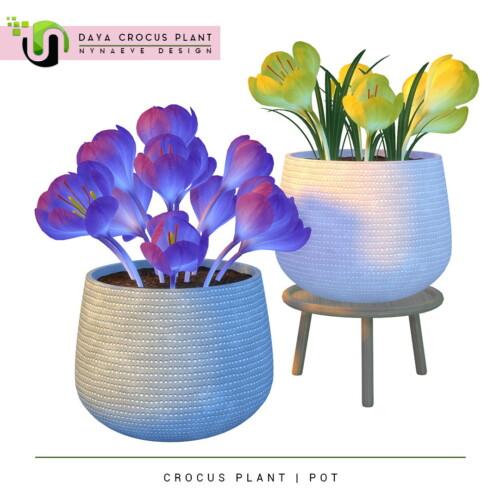 Daya Crocus Plant