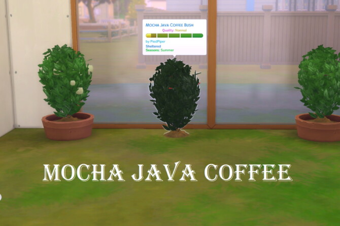 Sims 4 Harvestable Mocha Java Coffee by PiedPiper at Mod The Sims 4