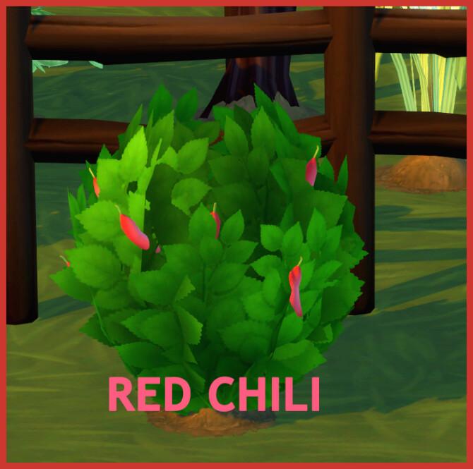 Sims 4 HARVESTABLE RED CHILI at Icemunmun