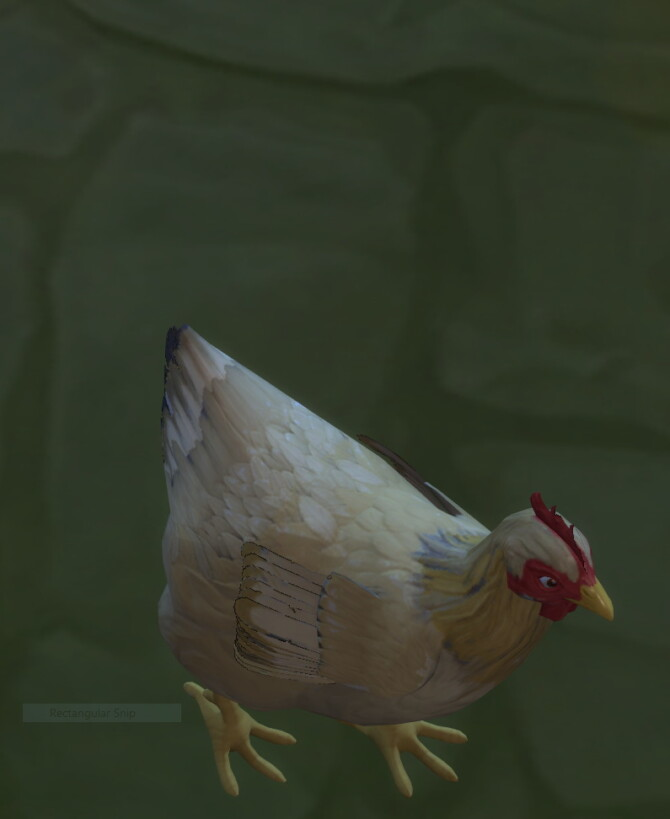 Sims 4 Real Breeds: Buff Orpington hen by lowflyer at Mod The Sims 4